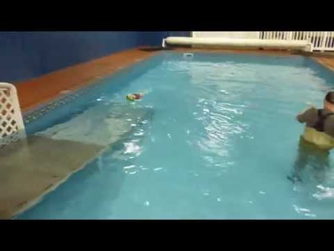 Dog Breeds not normally thought of as Natural Swimmers at Alaska K9 Aquatics