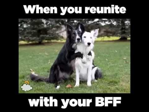 When You Reunite With You BFF - Funny Sweet Dogs