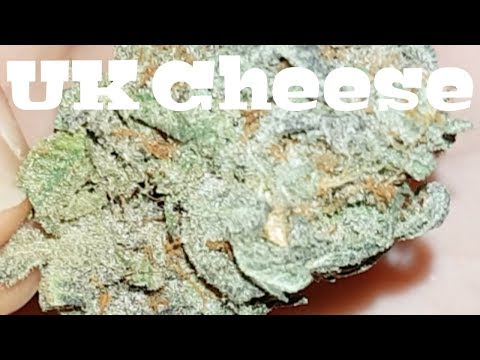 Canadian Cannabis Strain Review - UK Cheese