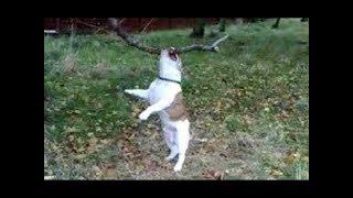 Смешные собаки висят и качаются на ветках деревьев. Сборник 2019