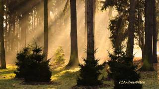 Video The Forest's Awakening - ERNESTO CORTAZAR download MP3, 3GP, MP4, WEBM, AVI, FLV Agustus 2018