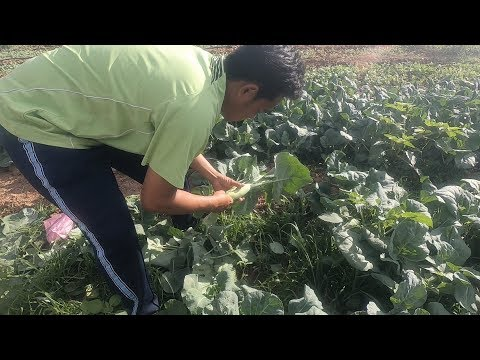 Agriculture Farming In Thailand