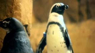 audubon aquarium of the americas commercial penguins