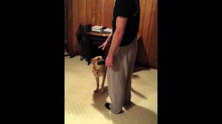 Training Your Dog To Get Their Food Bowl!
