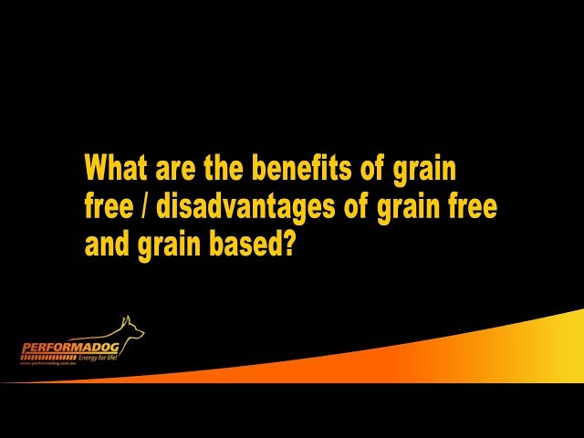 What are the benefits of grain free, disadvantages of grain free and grain based foods?