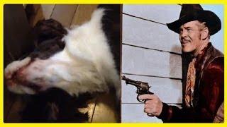 犬用のおやつ(歯に良いせんべい) →https://amzn.to/2H4rsa7 ※アマゾンア...