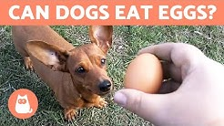 Can Dogs Eat EGGS? - Raw, Cooked or With Shell?