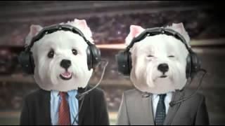 Cesar Canine Cuisine: Westie Super Bowl