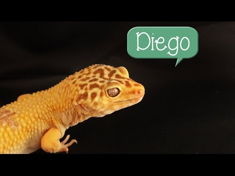 60 Possible Names For Your Pet Lizard