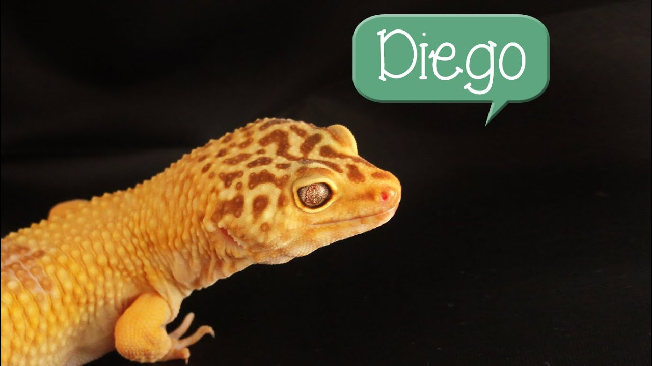 60 possible names for your pet lizard youtube