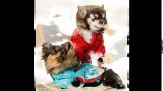 одежда для собак скидки