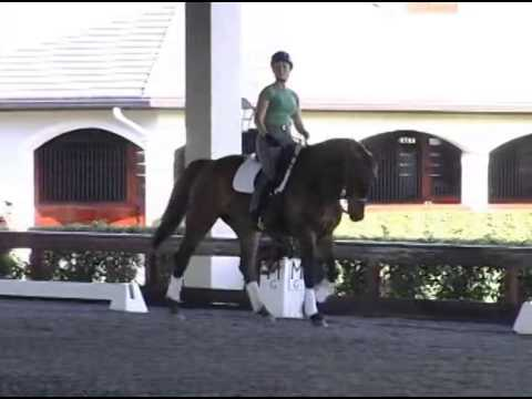 Edward Gal Works With Rider On Self Carriage And Getting The Response You Want