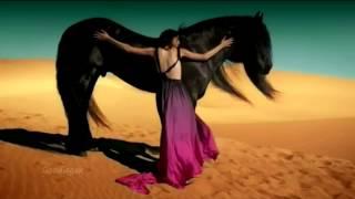 Gipsy Kings - Viento Del Arena [ HD video ]