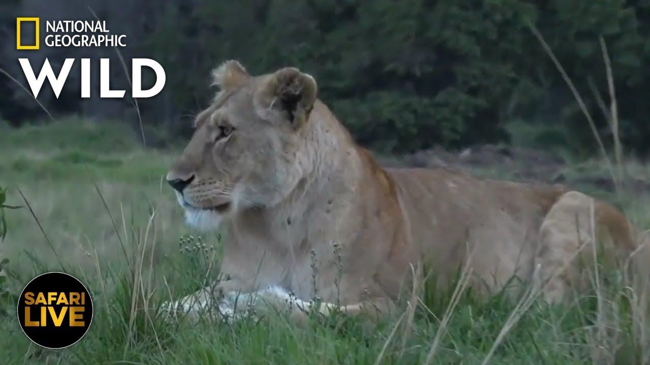 Safari Live - Day 279 | Nat Geo Wild