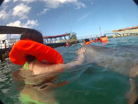 Swimming with Dolphins in Cuba 2013 Go Pro HD (Schwimmen mit Delfine in Kuba 2013 )