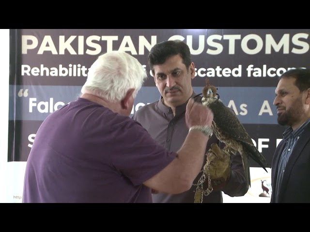 Falcons in Pakistan: Birds of prey fall as they are hunted by poachers