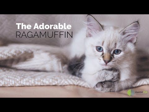 The Adorable Ragamuffin