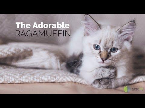 The Adorable Ragamuffin