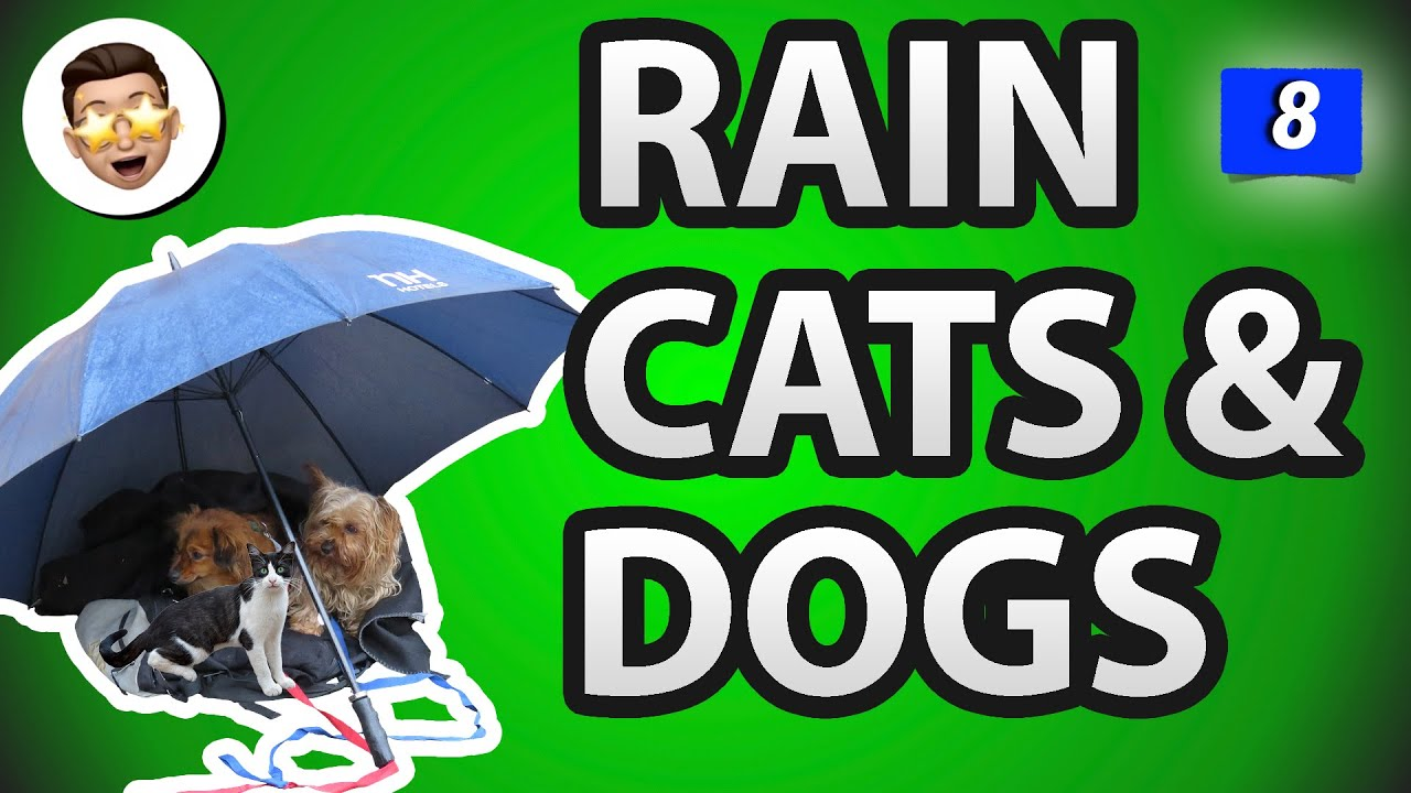 Rain Cats And Dogs Idiom Meaning Most Common English Idioms Easy To Use In Daily Conversations 8 Youtube