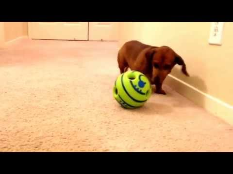 dog-toy-ball-that-makes-noise-1