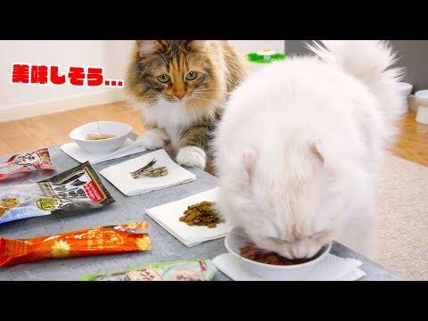 【2/22】猫の日に大好きなおやつでバイキング