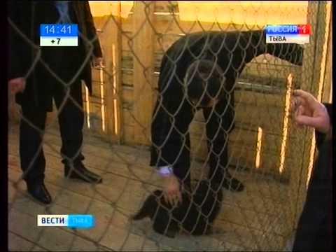 Глава Тувы посетил питомник где выращивают тувинских собак