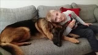 Deutscher Schäferhund- Gib mir den Apfel. German Shepherd- Give me the apple.(, 2017-11-18T13:26:03.000Z)