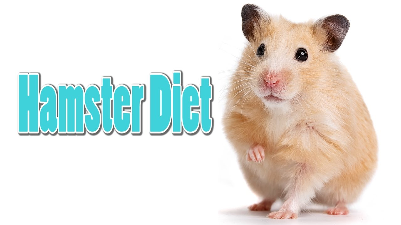 Hamster Diet - Requested