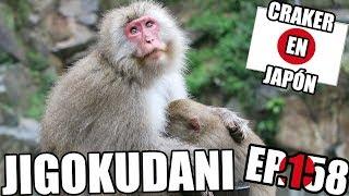 JIGOKUDANI SNOW MONKEY PARK NAGANO | Los monos de Onsen | Craker en Japón