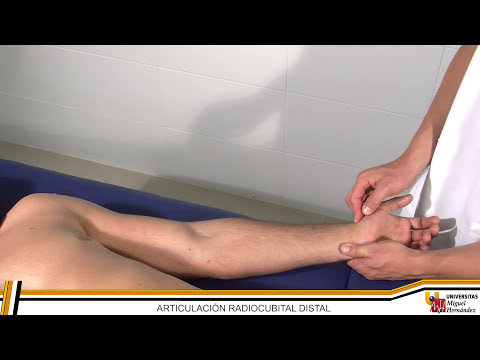 UMH - Terapia Manual I: MANO Y MUÑECA