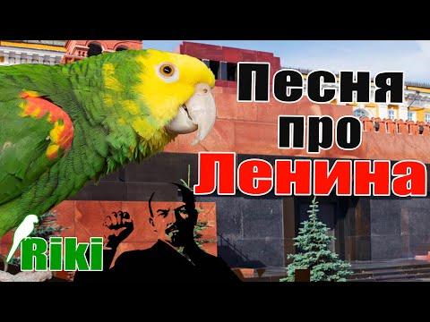 Попугай амазон Рики поёт песню про Ленина и Разговаривает!