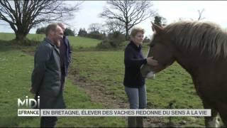 FEUILLETON : En Bretagne, élever des vaches redonne du sens à la vie