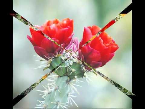 Desert flower for u