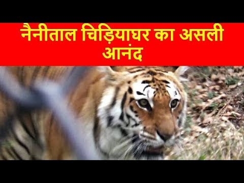 Nainital Zoo नैनीताल चिड़ियाघर  Colourful Animals Tiger, Leopard,Bear, wolf, Panda : Tourist Places