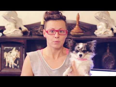 Вопрос: Стали ли вы бы заводить животное в квартире Зачем?