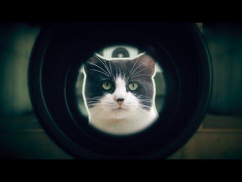 В поисках shooter'a