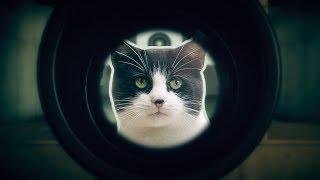 В поисках shooter