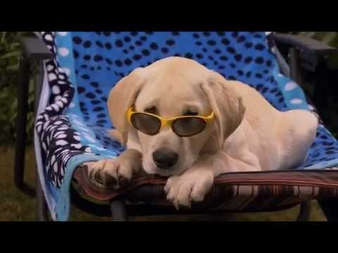 Marley and Me: The Puppy Years Official Trailer