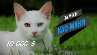 Самые дорогие породы кошек  Топ 18