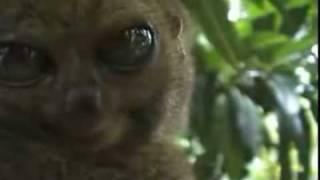 Possessed lemur demon