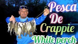 pesca de white perch y crappie en rio en maryland