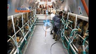 Une salle de traite 2x8 pour traire 80 vaches en 1 heure - GEA DairyParlor P7550