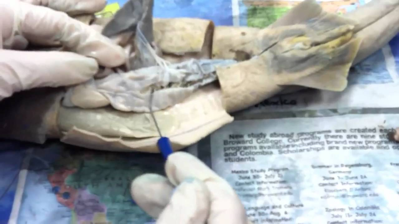 Shark dissection Biology Lab - YouTube