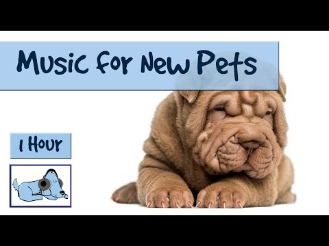 over-an-hour-of-relaxing-dog-and-puppy-music!-perfect-for-new-pets.