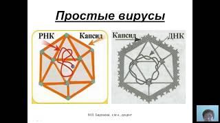 Общая микробиология (Бадлеева М.В.) - 4 лекция