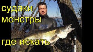 Подводная охота на трофейных судаков Моя тактика поиска монстров Spearfishing for walleye