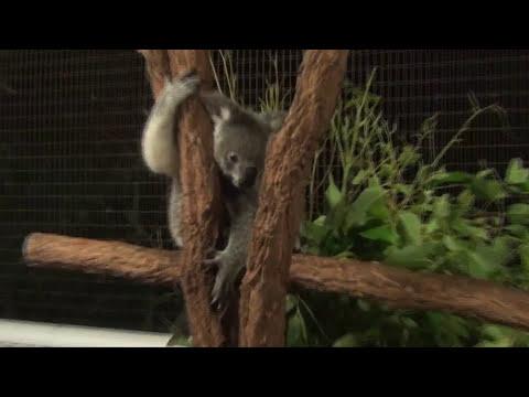 Cairns City In Queensland, Australia, Travel & Tourism Video