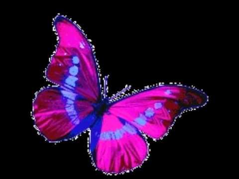 Las Mariposas Mas Bonitas Youtube