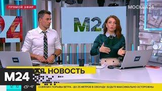 Москвич потерял сознание в результате падения дерева на его машину – СМИ - Москва 24