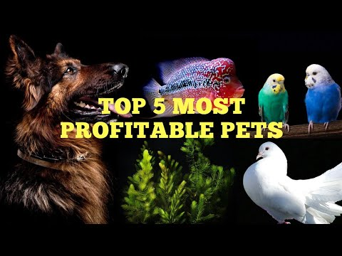 Top 5 Most Profitable Pets in our Hobby... - YouTube